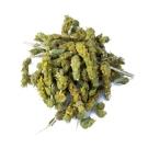 Βιολογικό Βότανο Τσάι Βουνού - Τσάι Βουνού BIO  NATURE'S GOLD